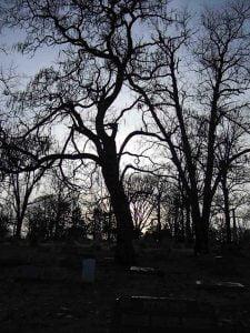 Nite-Tree_LoRes2
